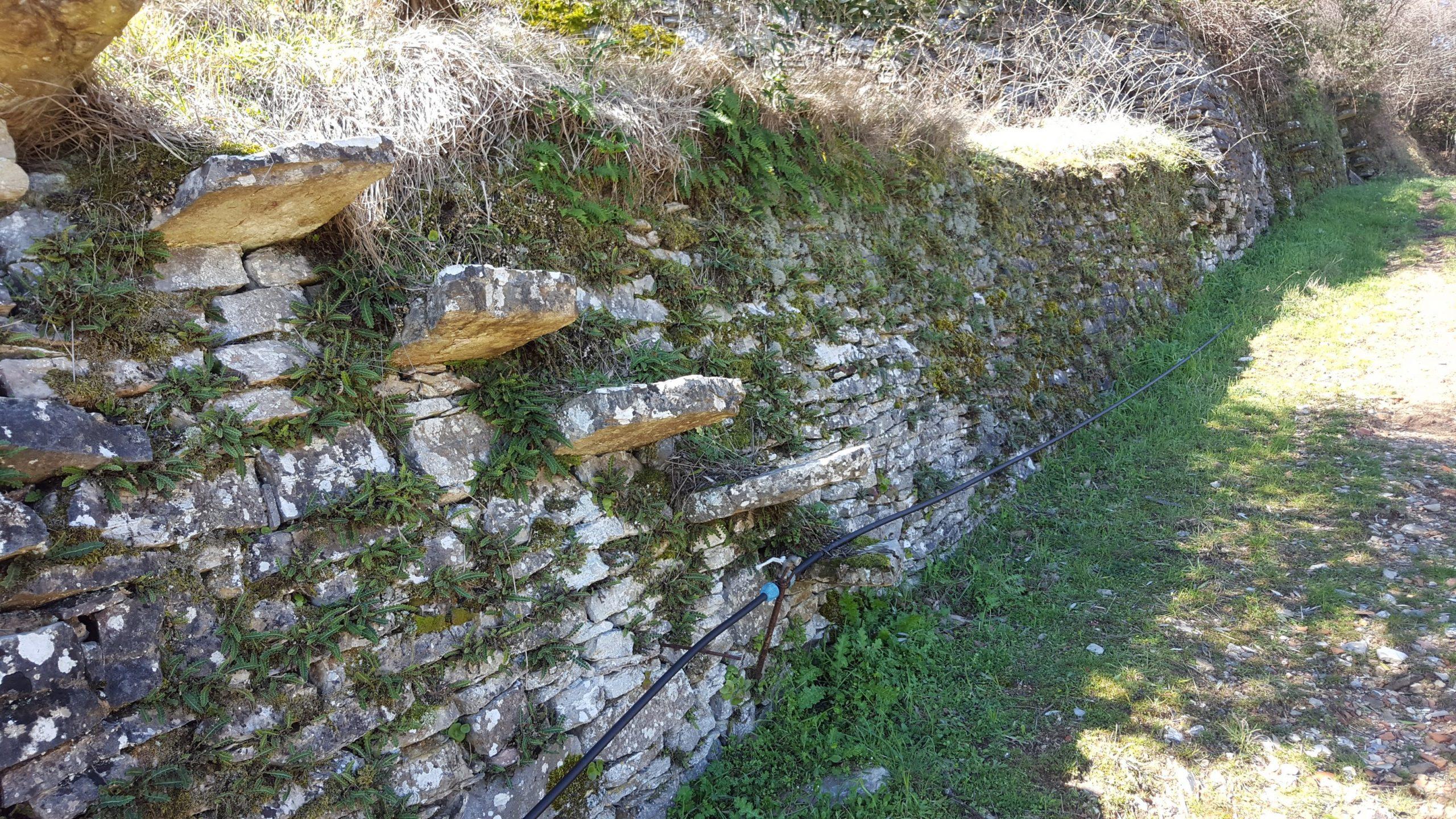 Il luogo – San Donato in Bellaria